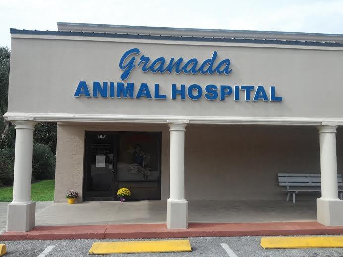 Granada Animal Hospital Ormond Beach Fl