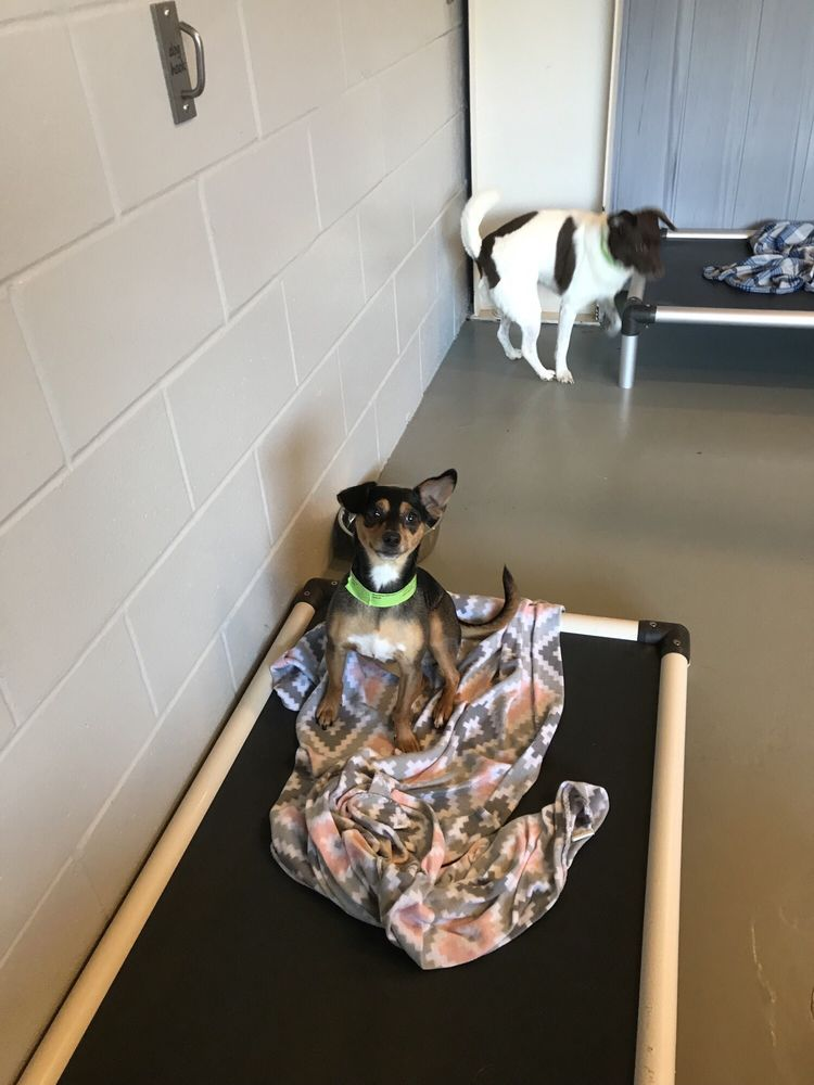 Lucky Dog Lodge: 14449 Hwy 73, Prairieville, LA