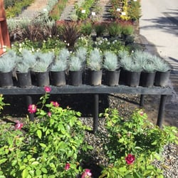 Photo Of Curby S Nursery Temecula Ca United States Variety Color And