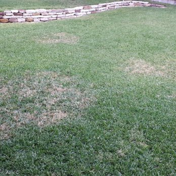 Photo Of Hawx Pest Control Austin Tx United States My Lawn After