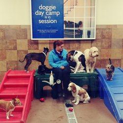 petsmart dog training