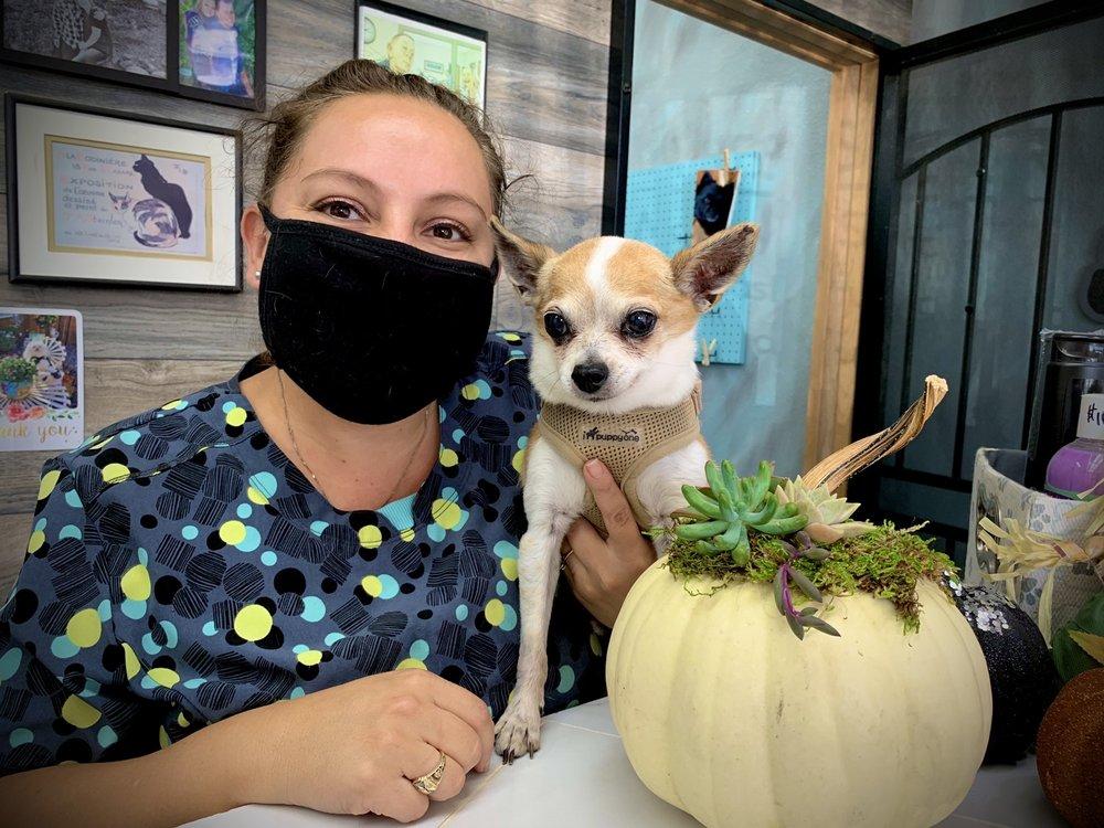 Angel's Pet Parlor: 843 Jamacha Rd, El Cajon, CA