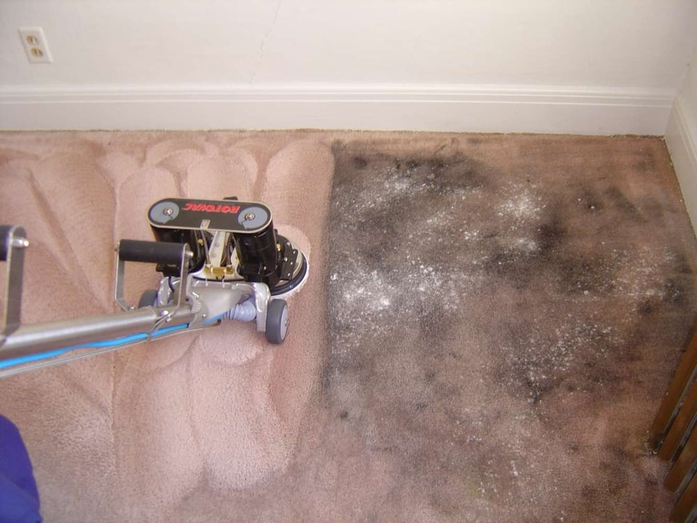 7 photos for Bay Point Carpet Cleaning