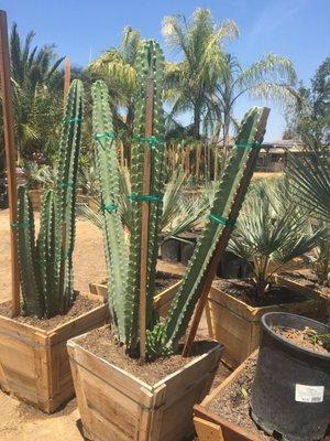 Macias Nursery 29900 Sierra Del Sol Thousand Palms Ca Nonclified Elishments Mapquest