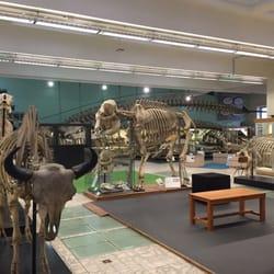 Aquarium Mus Um De L Universit De Li Ge Museums Qu