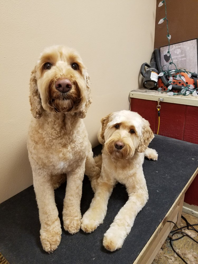 Melissa's Furry Friends Pet Grooming: 22005 Beavercreek Rd, Beavercreek, OR