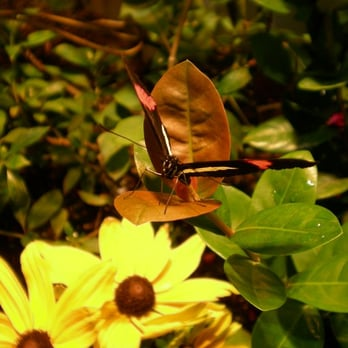 Audubon Butterfly Garden And Insectarium 632 Photos 167 Reviews Zoos 423 Canal St