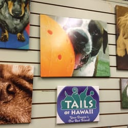 Tails of hawaii webcam