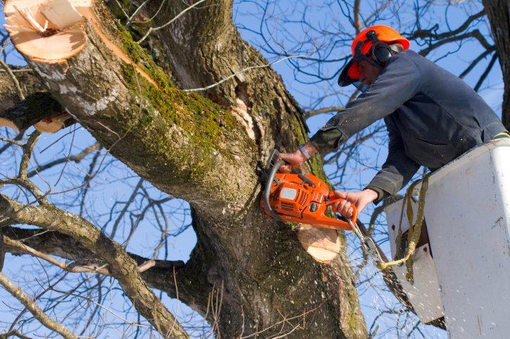 Mendoza Tree Expert-Cashiers: Cashiers, NC
