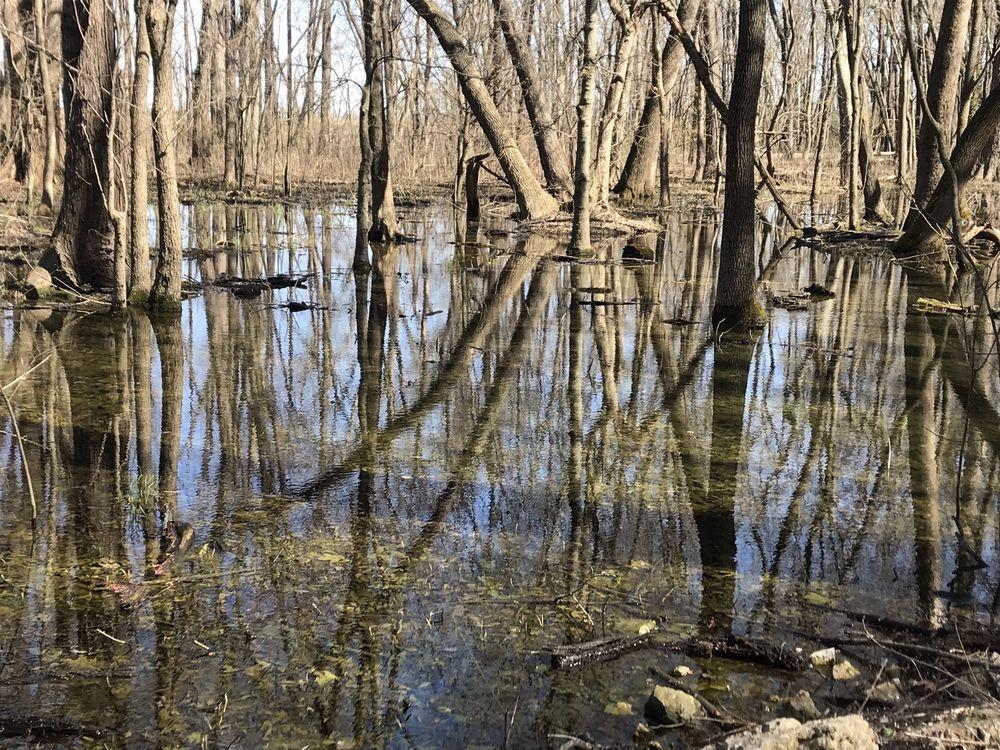Salt Lick Trail: 1309 Limestone Ln, Valmeyer, IL