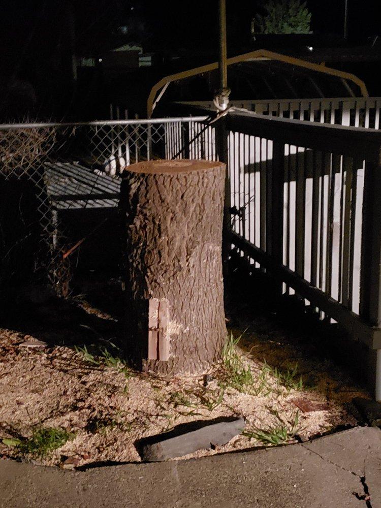 AVR Tree Service: Clearlake, CA