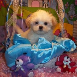Mainely Puppies Plus 48 Photos Pet Stores 280 Park St South