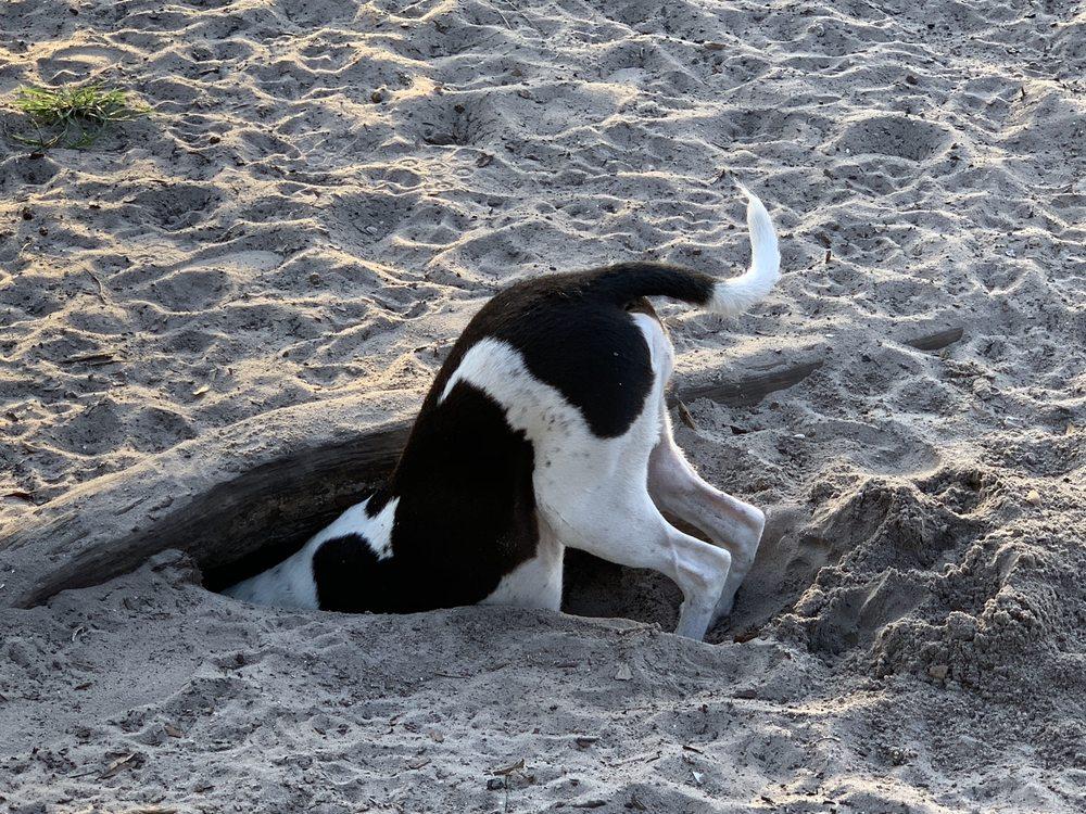 Barkingham Dog Park: 9800 Buckingham Rd, Fort Myers, FL
