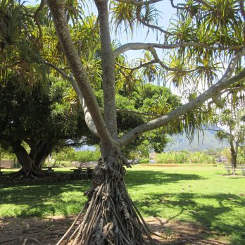 Incroyable Photo Of Maui Nui Botanical Gardens   Kahului, HI, United States