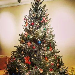 photo of dc tree delivery washington dc united states - Dc Christmas