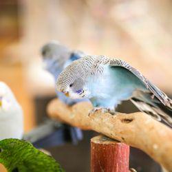 Parrot Planet - CLOSED - 390 Photos & 90 Reviews - Bird