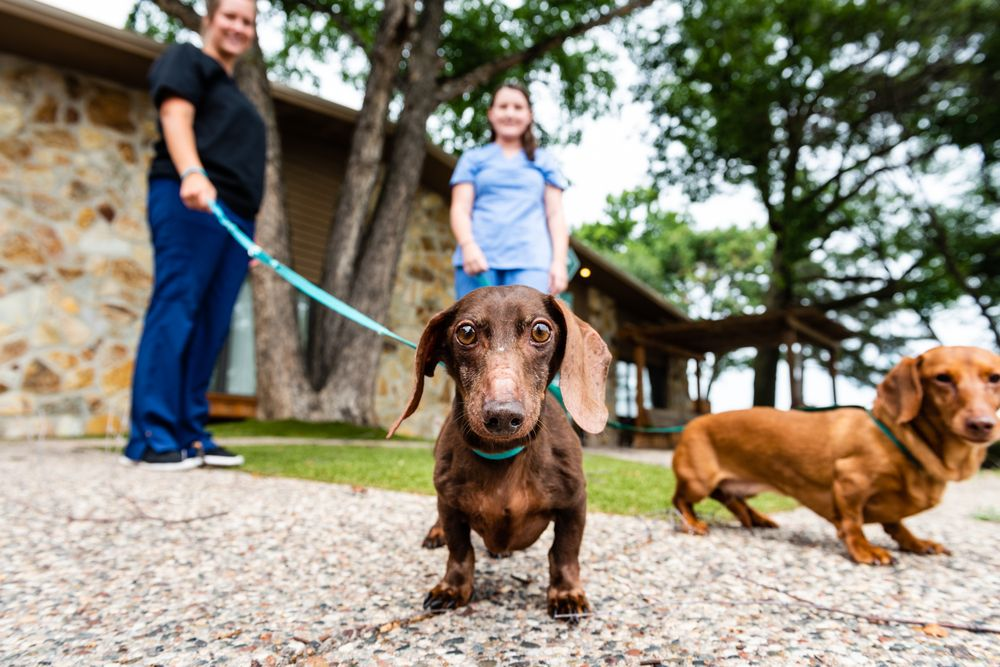 Minnesota Veterinary Hospital: 4545 Hodgson Rd, Shoreview, MN