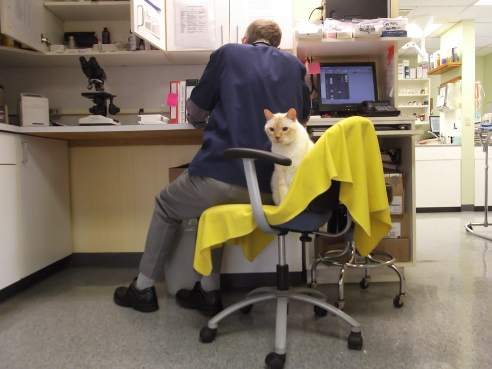 Pacific Avenue Veterinary Clinic: 2625 Pacific Ave, Forest Grove, OR