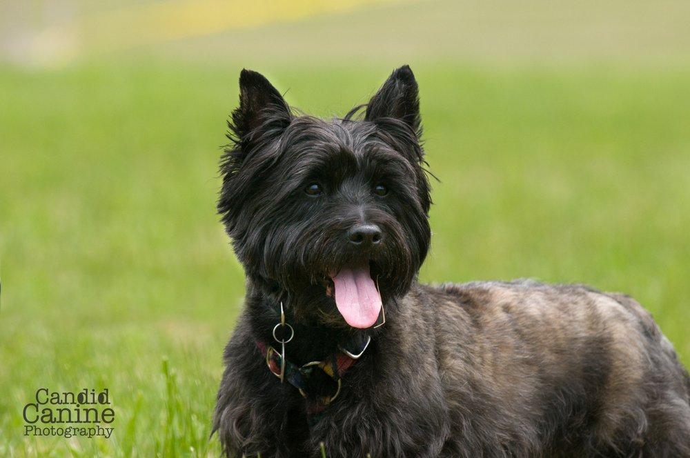 Candid Canine Photography: Hobart, NY