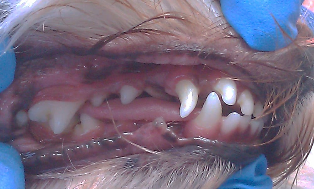 Natural Pet Tooth Fairy Reviews
