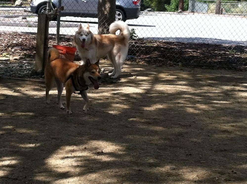 Hellyer Dog Park Hours