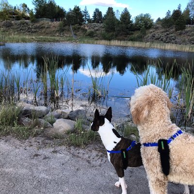 Bark Busters Home Dog Training - Reno