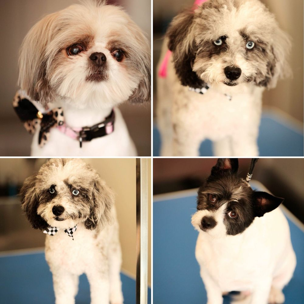 The Dapper Dog Grooming Salon