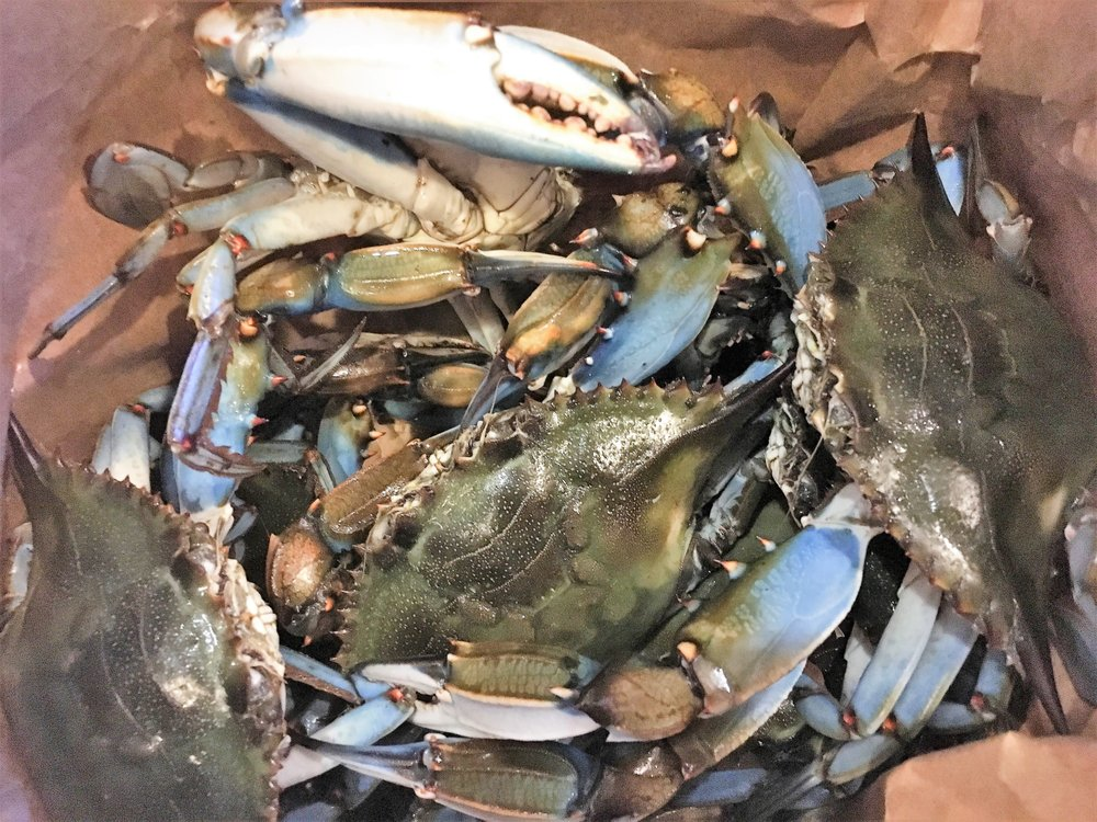 Live blue crab monsters yelp for Pops fish market