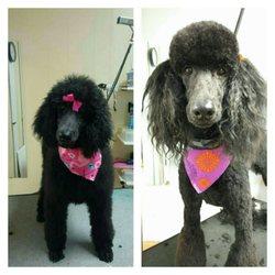 Dog Grooming Roanoke Va