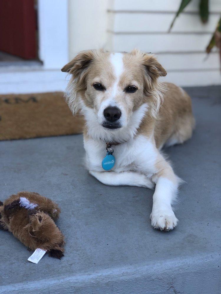 Shay's Strays Animal Rescue: Springville, CA