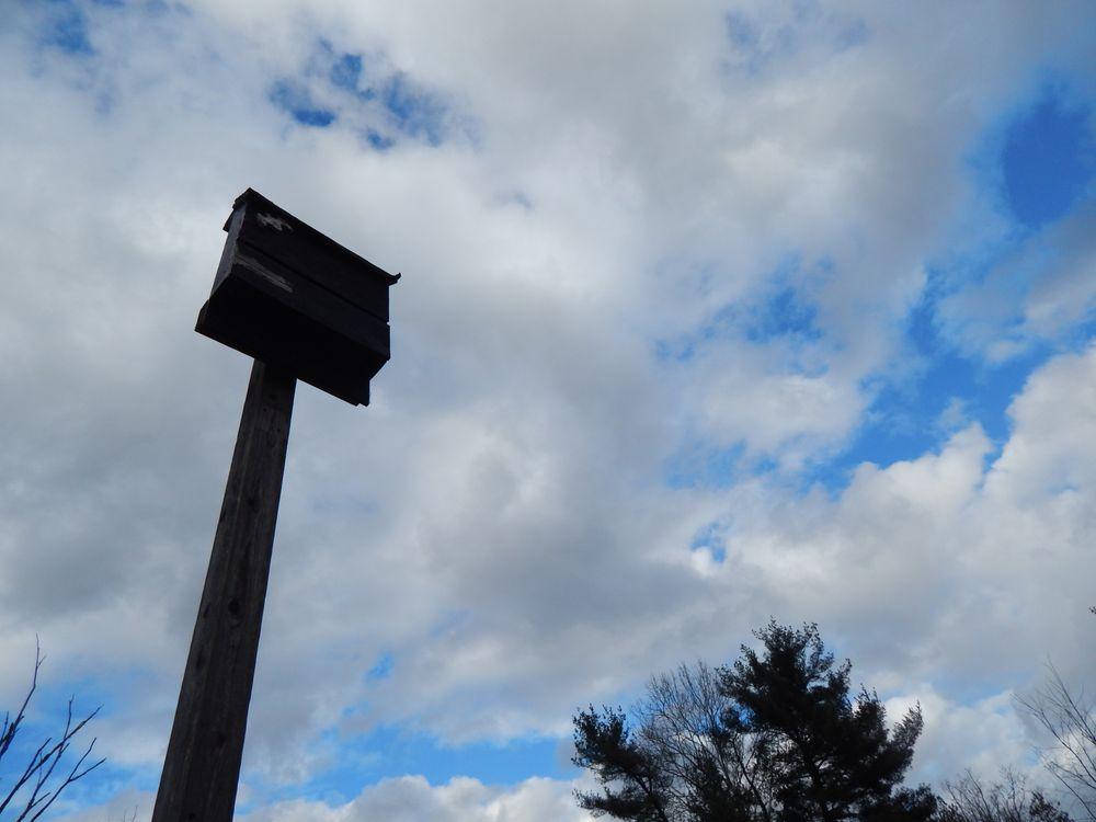 Wingfield Pines: Mayview Rd, Pittsburgh, PA