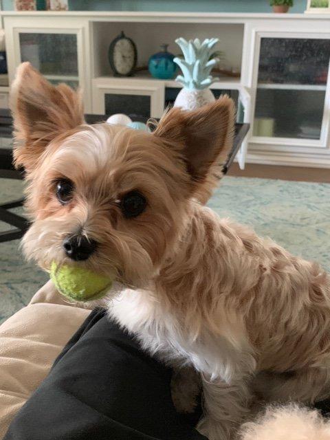 Peaceful Pet Passing: Brentwood, CA