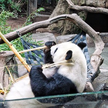 San Diego Zoo Photos Reviews Zoos Zoo Dr - 10 awesome zoos where you can spend the night