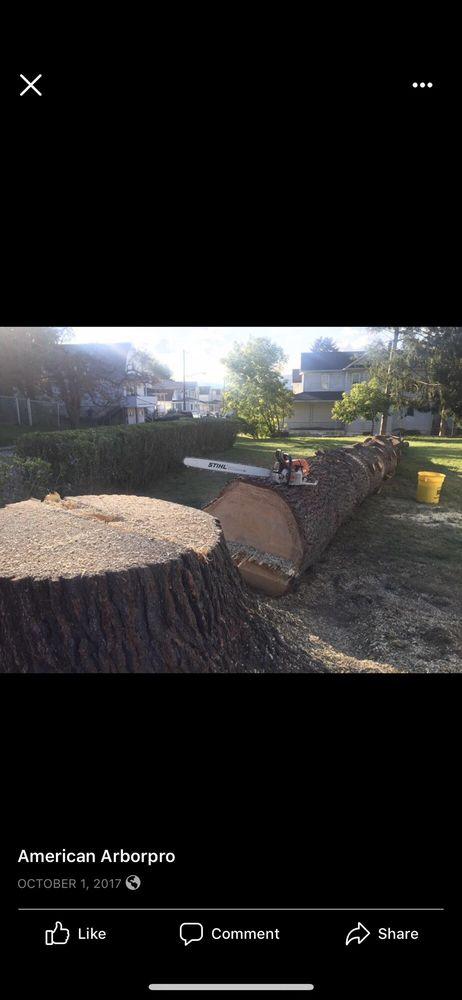 American ArborPro Professional Tree Service: Mountain Top, PA