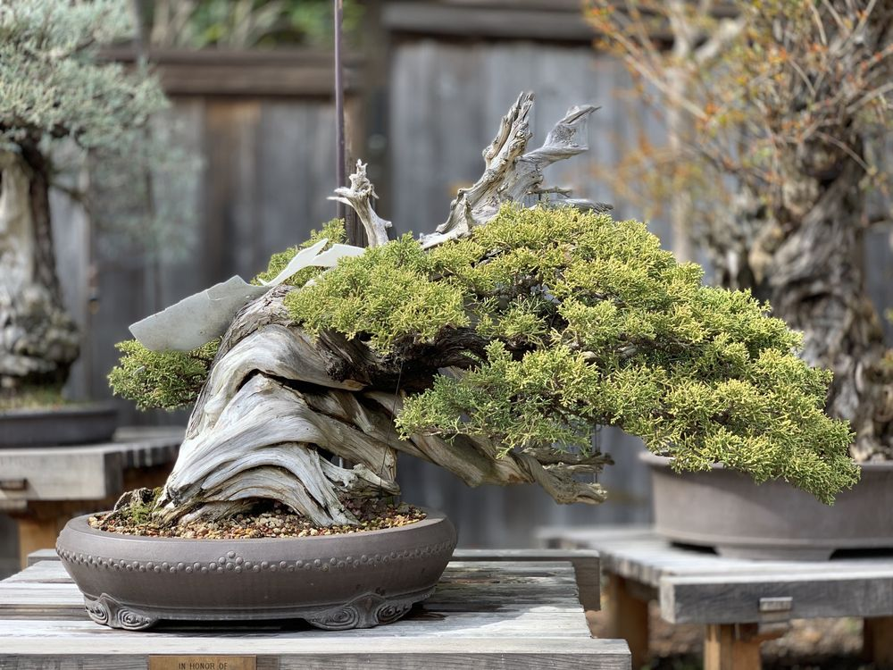 Bonsai Garden at Lake Merritt
