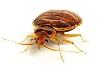 Bed Bug Solutions Cincinnati: 5267 Chateaugay Dr, Mason, OH
