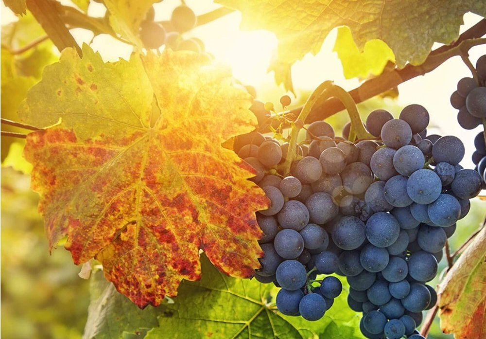 Long Island Vineyard Tours: 111 Albany Ave, Freeport, NY