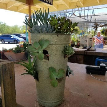 Photo Of Civano Nursery Inc Tucson Az United States Succulents