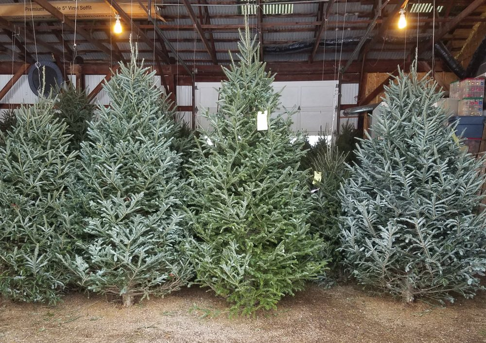 139f6bc1bcc Syracuse Christmas Tree Farm - Christmas Trees - 4809 Beef St ...