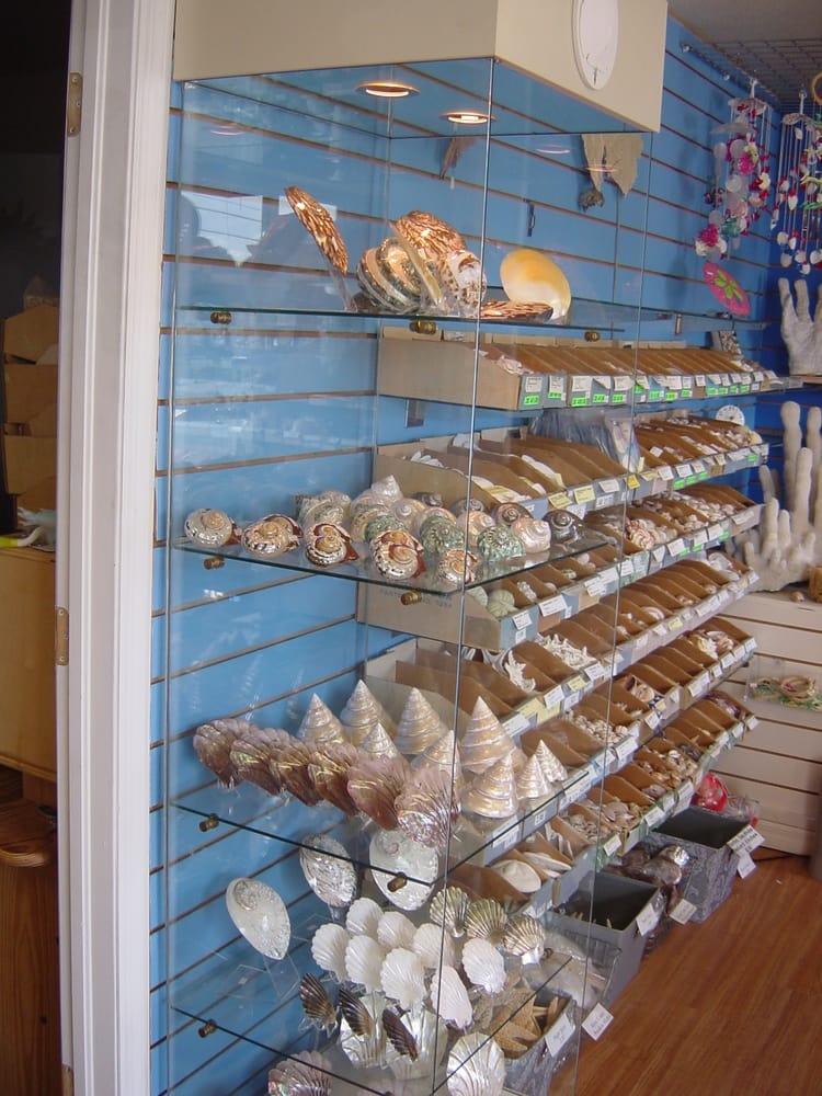 The Shell Store: 8211 Ulmerton Rd, Largo, FL