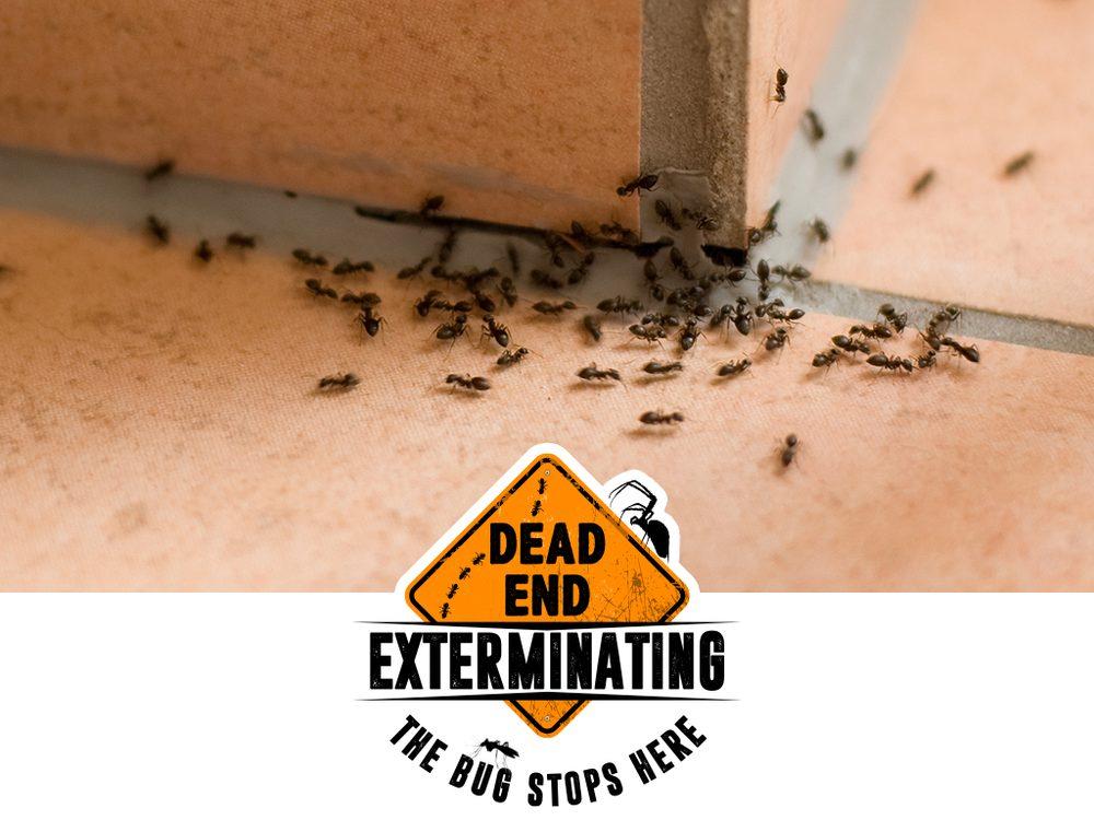 Dead End Exterminating: 760 Anchor Dr, Lenoir City, TN