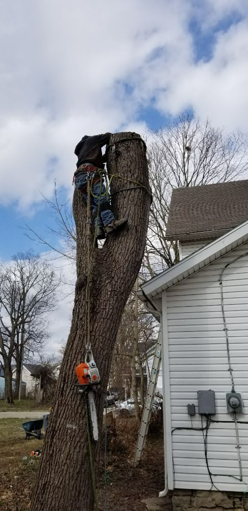 Coleman Lawn and Tree Services: 204 E Main St, Springfield, OH