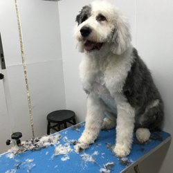 Dave's Dog Grooming - Pet Groomers - 5117 Judson Dr