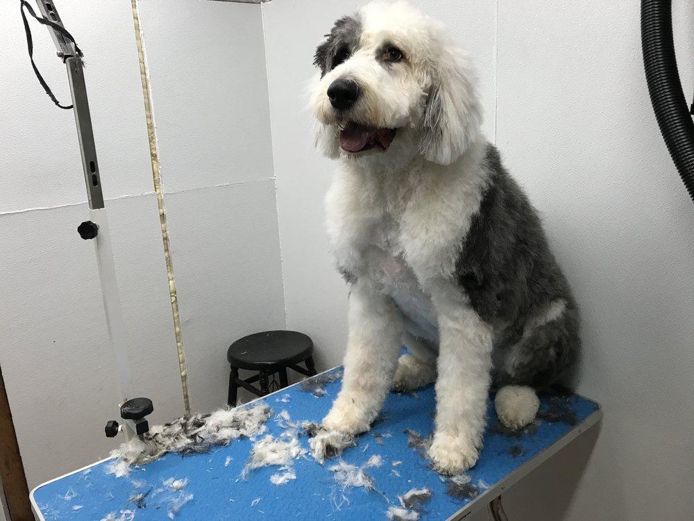Dave's Dog Grooming: 5117 Judson Dr, Bensalem Township, PA
