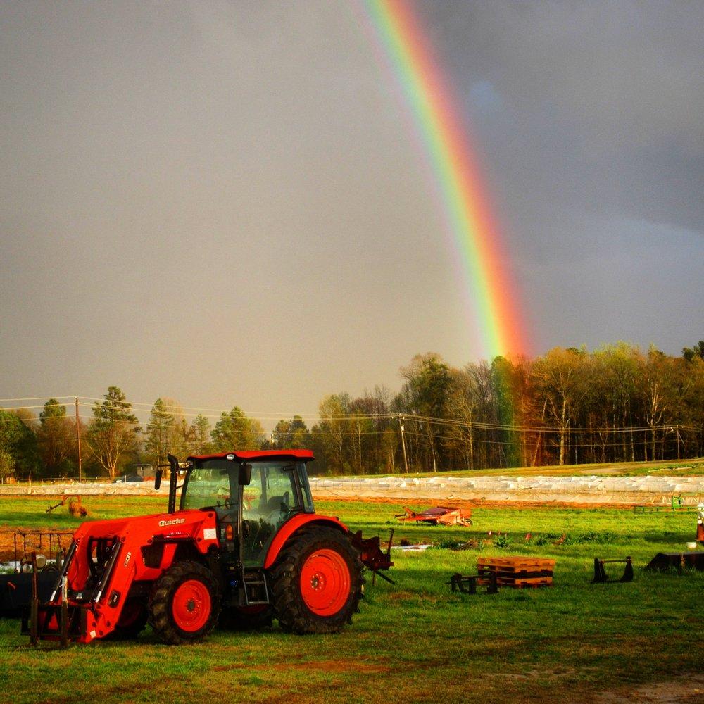 McAdams Farm: 1100 N Efland Cedar Grove Rd, Efland, NC