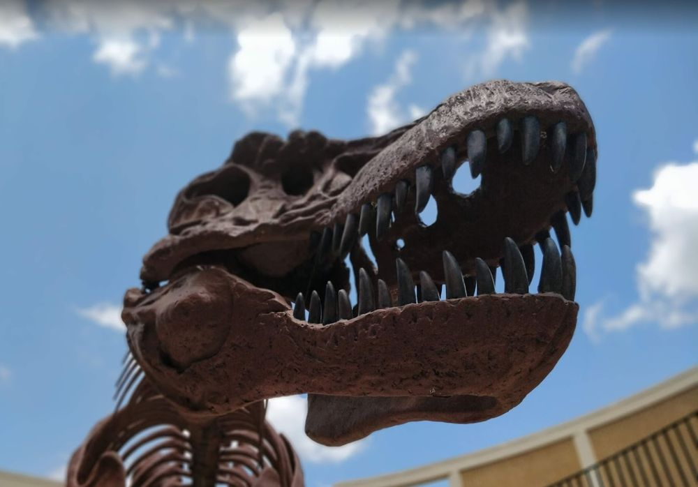 Dinosaur Science Museum and Research Center: 113 West Magnolia St, Keene, TX