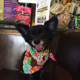 Photo Of The Pooch Patio   Dallas, TX, United States. Sheu0027s Happy :