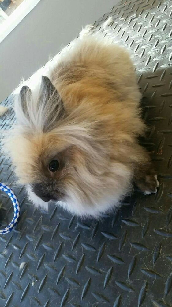 La Bella Pet Spa: 1200 Ellis Blvd NW, Cedar Rapids, IA