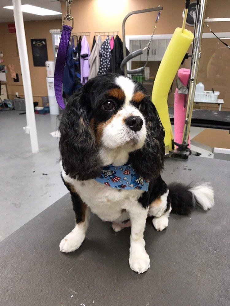 A Family Pet Salon: 248 Ogden Rd, Wenonah, NJ