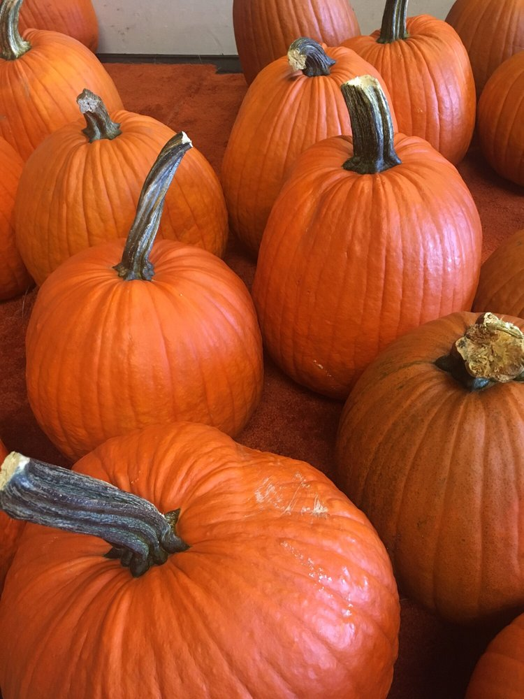 DeMoss Pumpkin Farm: 51428 170th St, Ames, IA